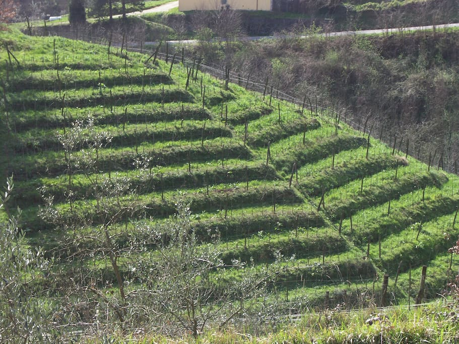 I nostri vigneti! (our vineyard)