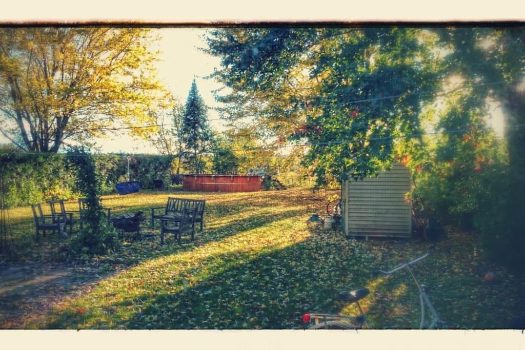 Backyard on a Fall day
