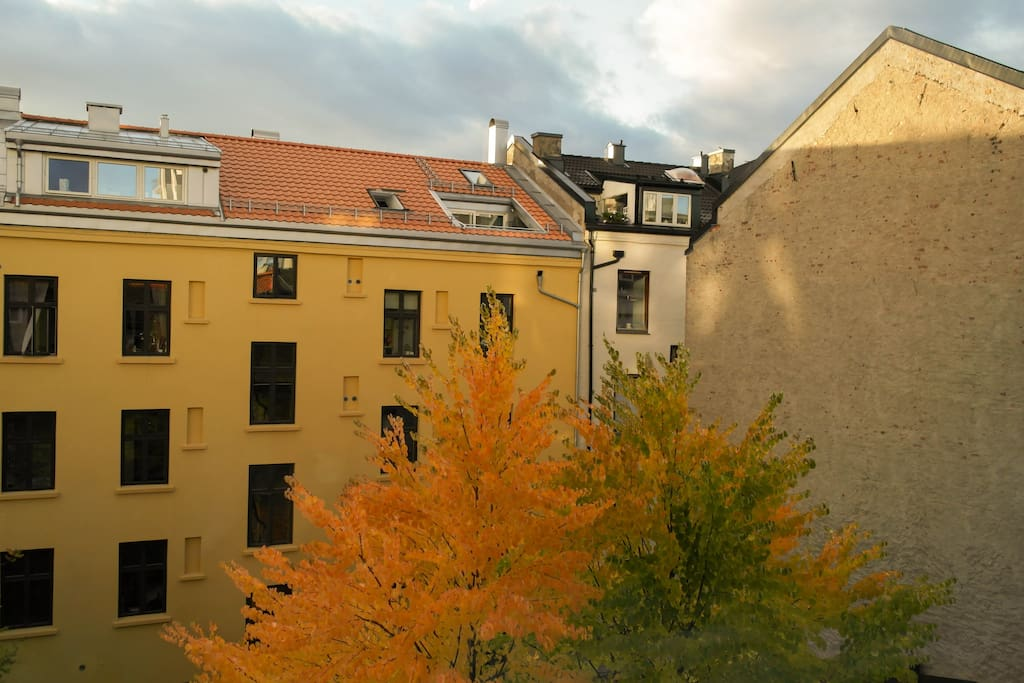 Classic Oslo backyard view