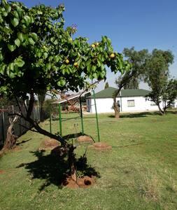 Olive Tree Eco Lodge