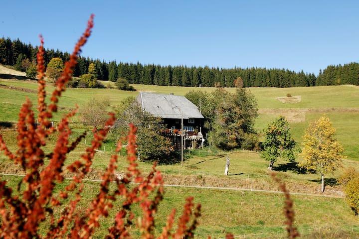 Schwarzwald pur - Schluchsee - Aamiaismajoitus