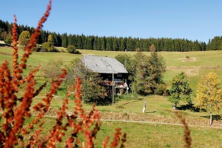 Schwarzwald pur - Schluchsee