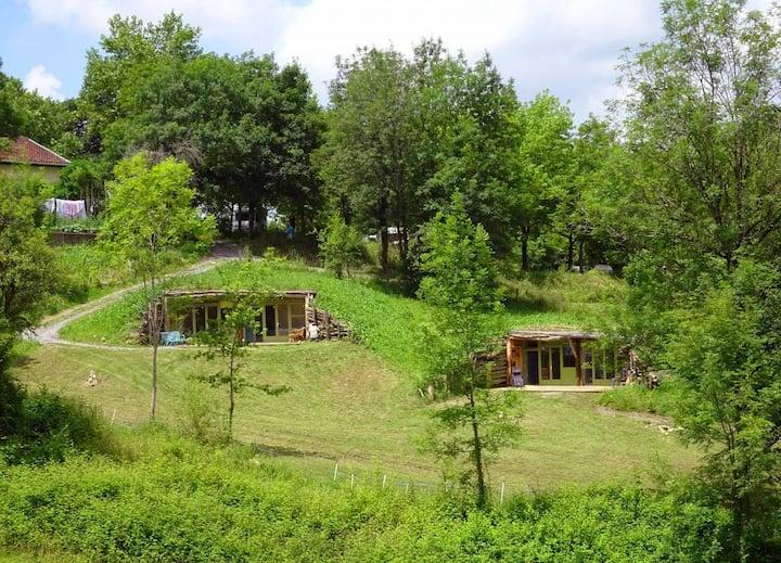 Unique Tree Log House