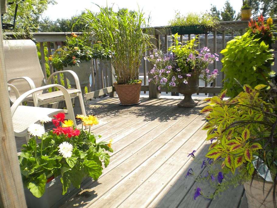 Back deck in the summer time.