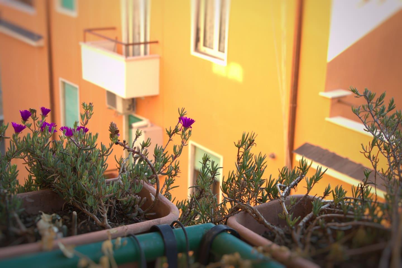 Flowers by Mom Ornella
