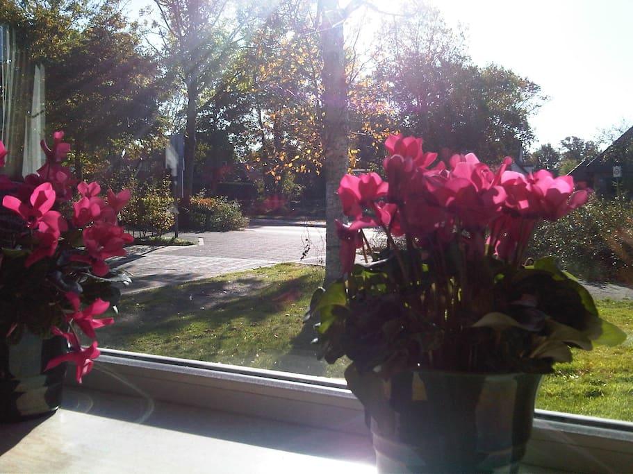 Partnersuche strausberg umgebung VELUX Fenster bringen Licht in Ihr Leben
