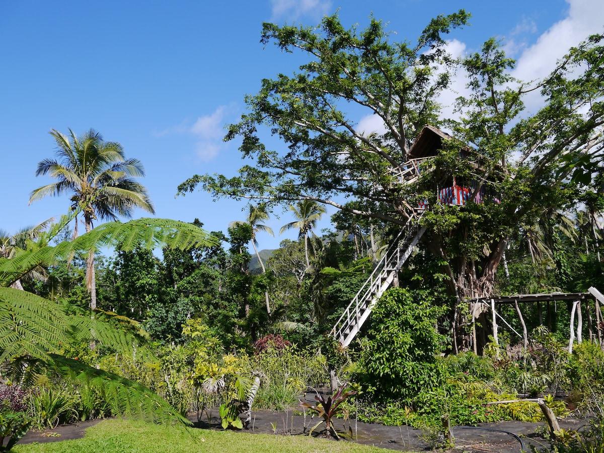 Rosa banane ainsi un formidable arbre devrait en aucun Oiseaux exotiques-jardin absence!