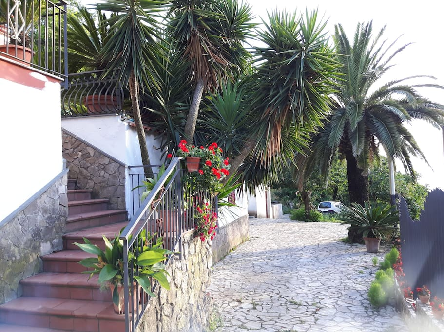 ...viale di ingresso  indipendente, privato. ... independent and private access to the Villa.