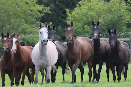 Horse Ranch, petting zoo, horseback riding, hiking - Sturgeon County