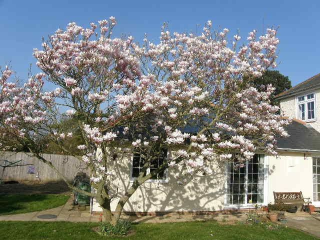 Magnolia Cottage - cosy countryside annexe - Lympne - บังกะโล