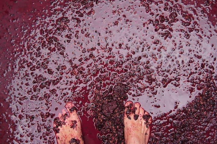 Tamar Vineyard Retreat