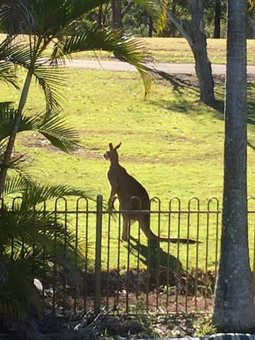Stay among wild Kangaroos & Koalas - Arundel - Dům