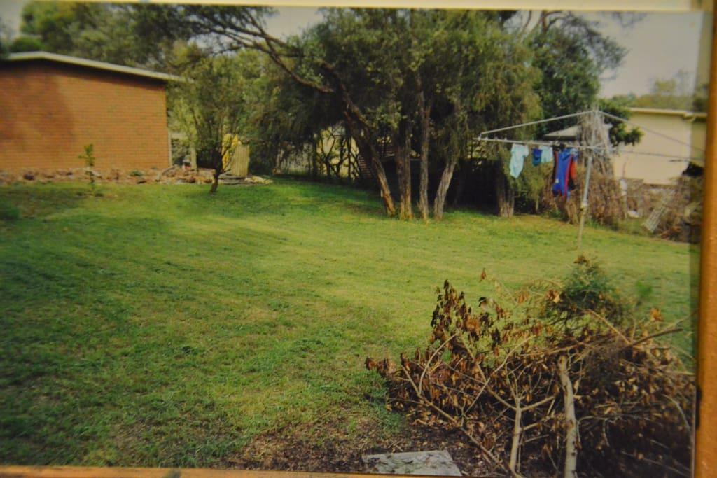 The backyard - big enough for any dog