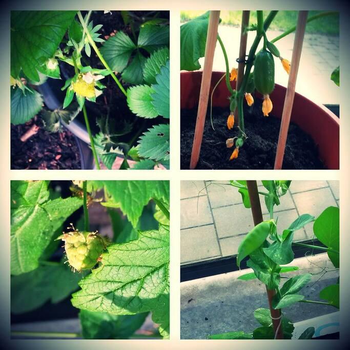 Balcony garden success