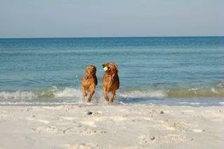 Your Pets Will Love Cape San Blas!