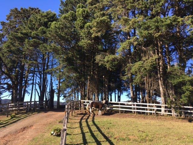 Cavalos, Tênis e vista linda a 15 min de Capivari