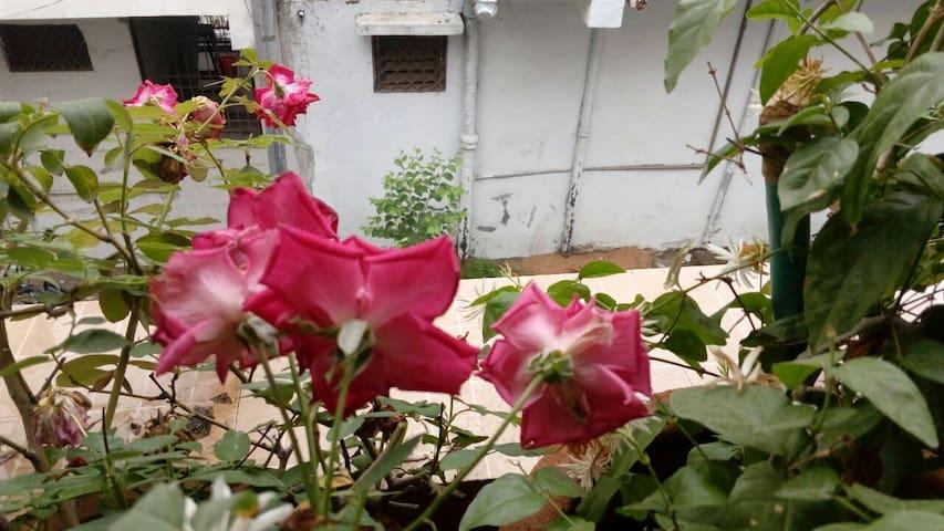 Tenement with terres garden