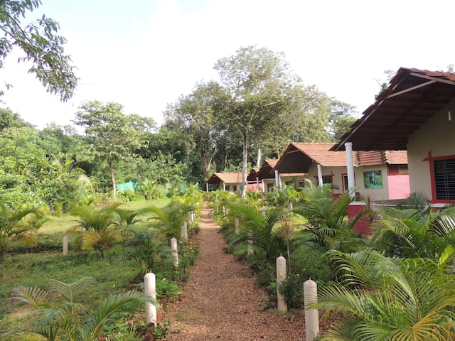 Home Stay in Dandeli Jungle  -  accommodation