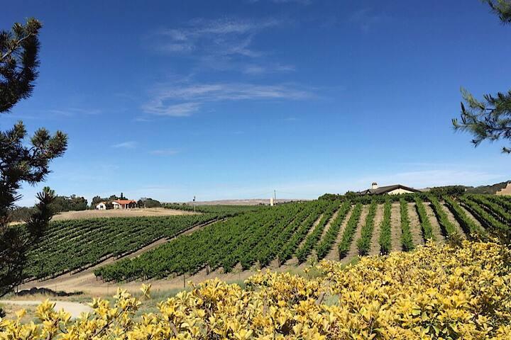 HILLTOP Dream Nestled in the Vineyards