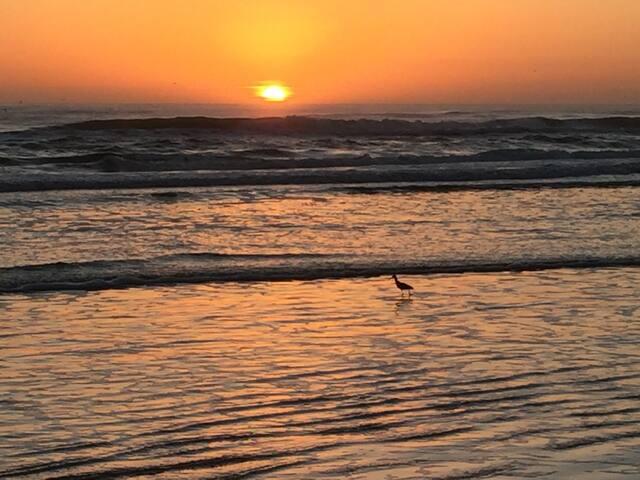 Enjoy Beach living in Daytona March 6-13, 2021