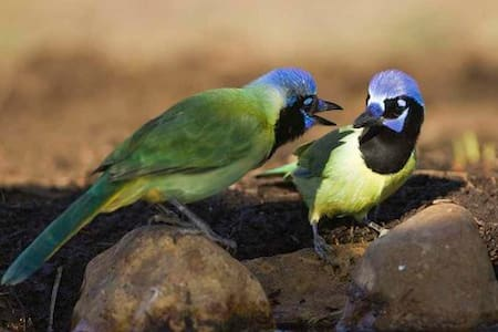 Green Jay Cottage at Barnhart Ranch - Berclair - Otros