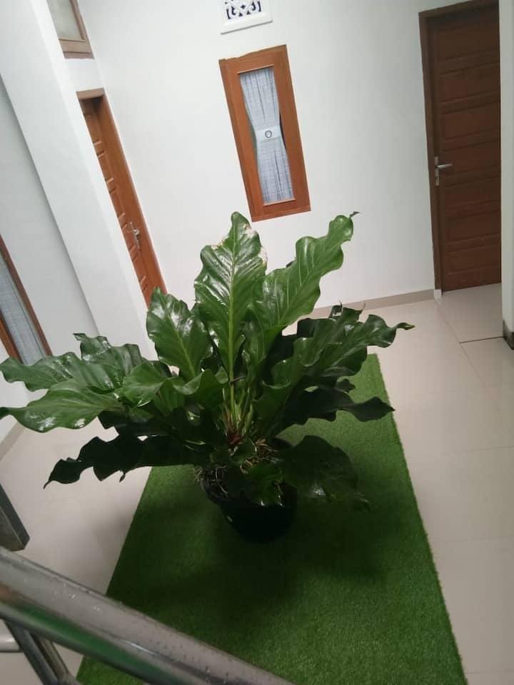 Sweet Lime : Simple&Friendly#1 floor 1