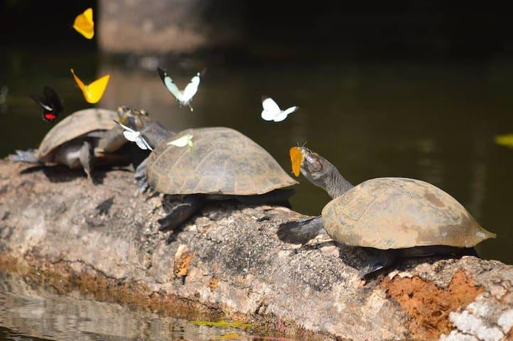 Ecoaventuras Amazonicas Tambopata birding tours