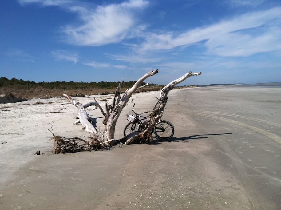 sapelo island catholic women dating site A south carolina woman's message in a she found it on sapelo island with a history of reliable reporting dating back to 1907, today's upi is a.