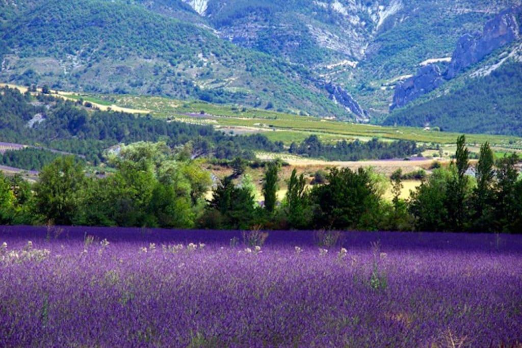 La Drôme et ses champs de lavande.