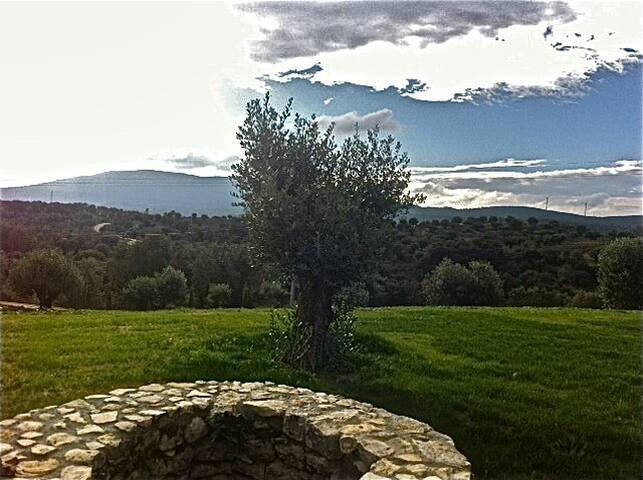 Olive Tree Room/Quarto da Oliveira - Torres Novas - Bed & Breakfast