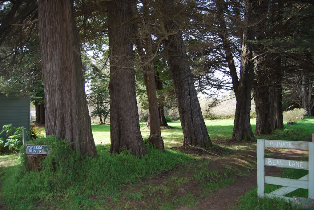 End of the road privacy with gorgeous cypress trees lining the property