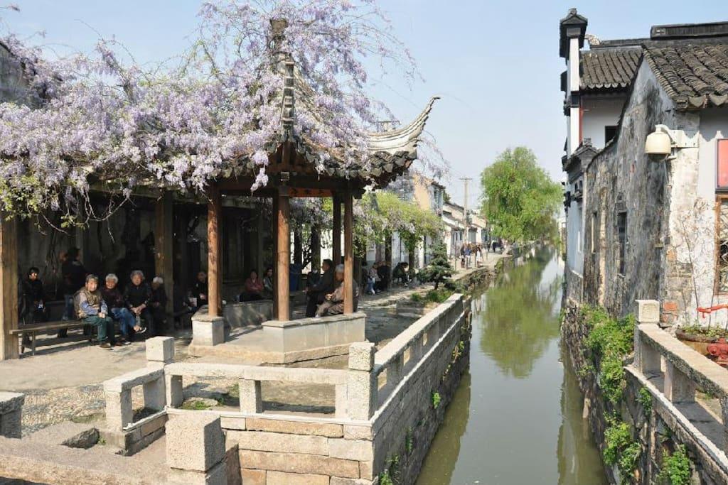 房子位于的弄堂在平江路上的巷子口,春天会爬满紫藤,很美