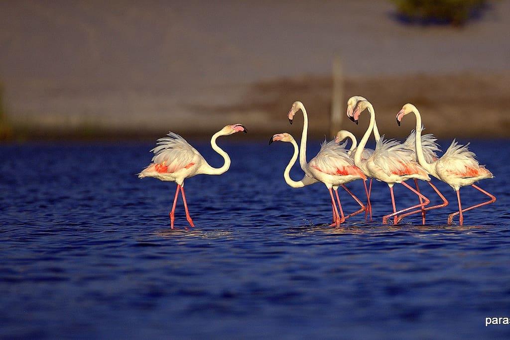 Birds on the Laguna (© CC Parascubasailor)