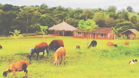 Casa de campo y turismo Rural
