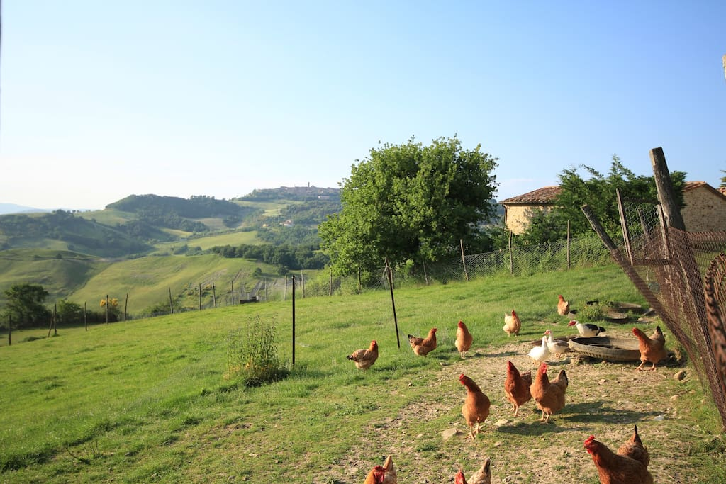 Agriturismo Marcigliana is an active farm with lots of animals, sheep and kitchens