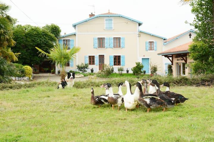 Appartement typique au cœur d'une ferme familiale - Caupenne - Apartment