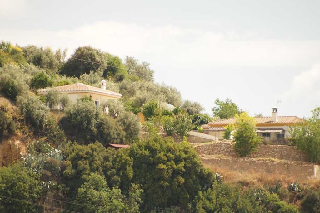Sorrounded by olive, orange, and almond trees/ Rodeado de olivos naranjos y almendros