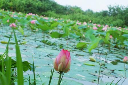 Lotus Villa Rooms - Kiribathgoda - Willa