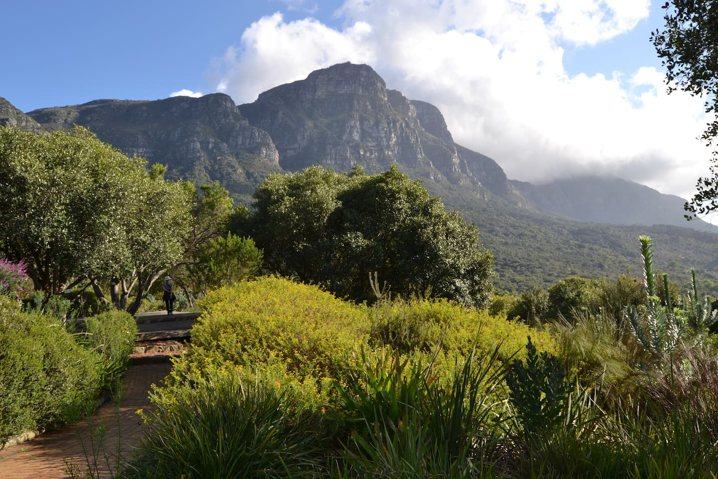Kirstenbosch Botanical Gardens, within walking distance of the lodge. The Kistenbosch Tea Room is a popular daytime restaurant, serving a variety of delicious meals.