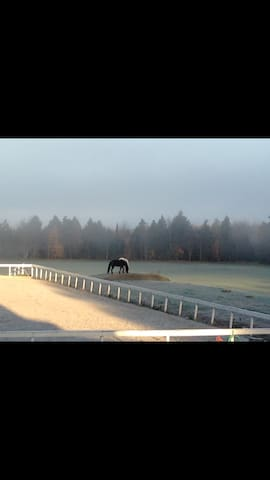 Ponies in the morning mist
