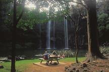 Whangarei Falls Walk