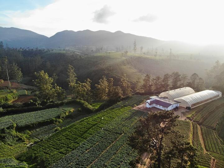 The Farmhouse Ambewela - A true farm experience
