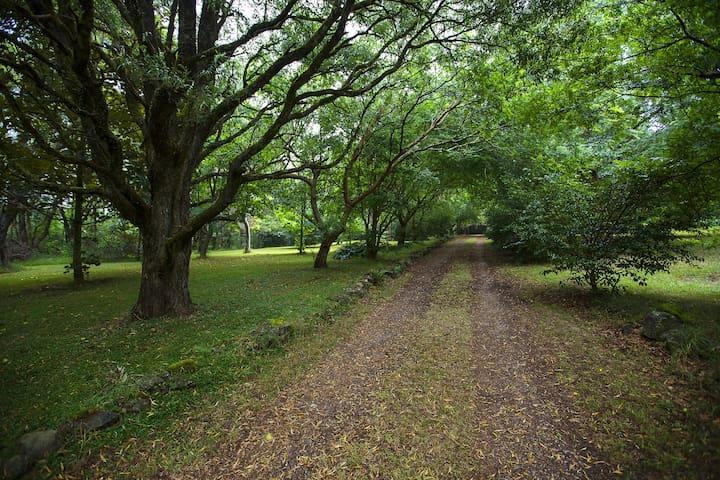 Mount Tomah Woodlands Retreat