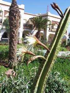 Logement en rez de chaussez - Agadir - Ortak mülk