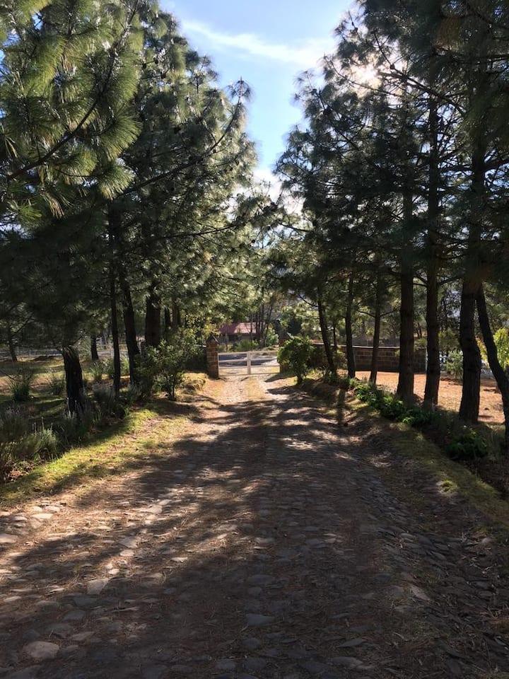 Cabaña Amealco Encino