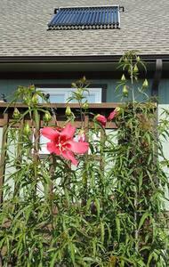 Blue Haven 151 Farm, Nelson County Virginia - 罗斯兰德(Roseland) - 宾馆