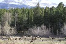 Herds of elk casually grazing can be seen in Genesee Park or nearby Evergreen. (Please do not try to pet or feed.)