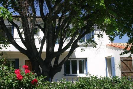 Beautiful spacious village house - Cascastel-des-Corbières - House