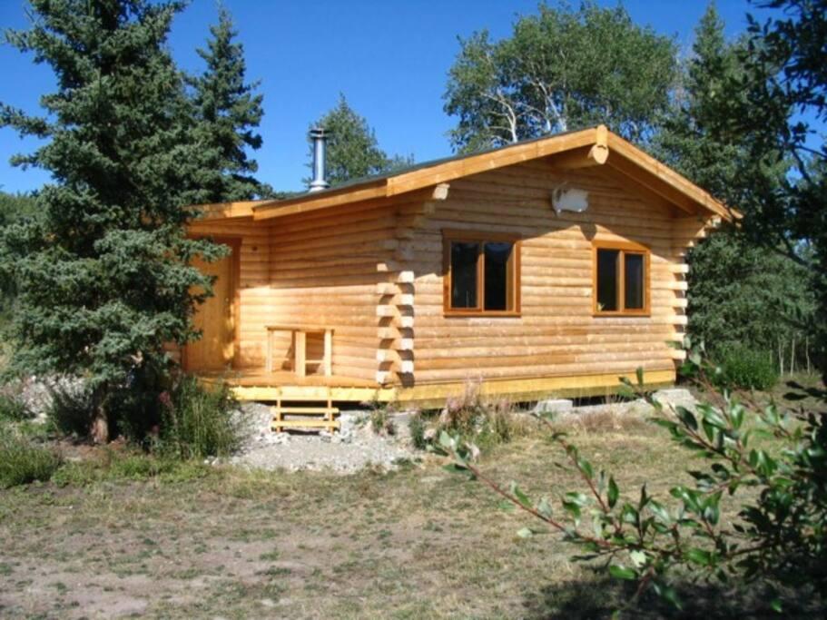 Cabin spruce