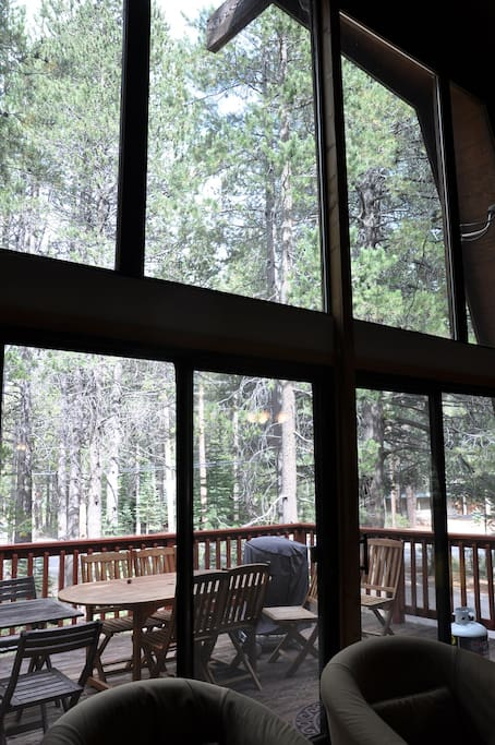 View of the trees from the living room